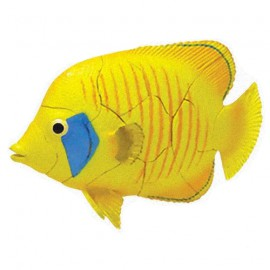 Butterflyfish 4D 3D Puzzle Egg Toy Kit