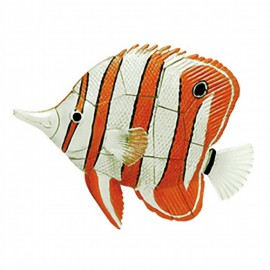 Copperband Butterfly Fish 4D 3D Puzzle Egg Toy Kit